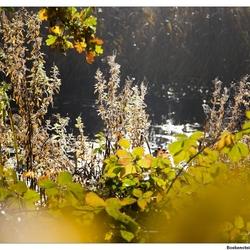 IMG_8982 Herfst serie