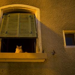 Catworld