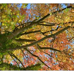 Herfst..eens anders bekeken