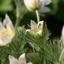 driftige bloeier in de tuin