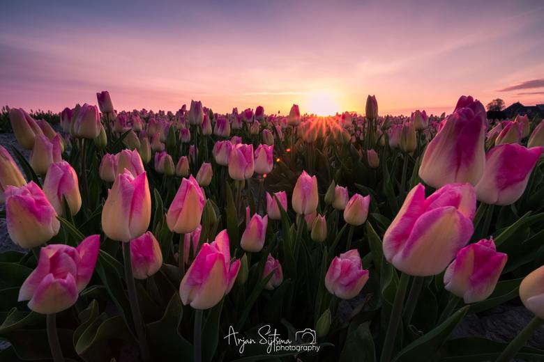 Pink landscape  -