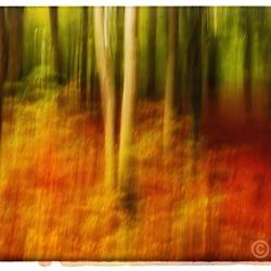 herfstbos in beweging