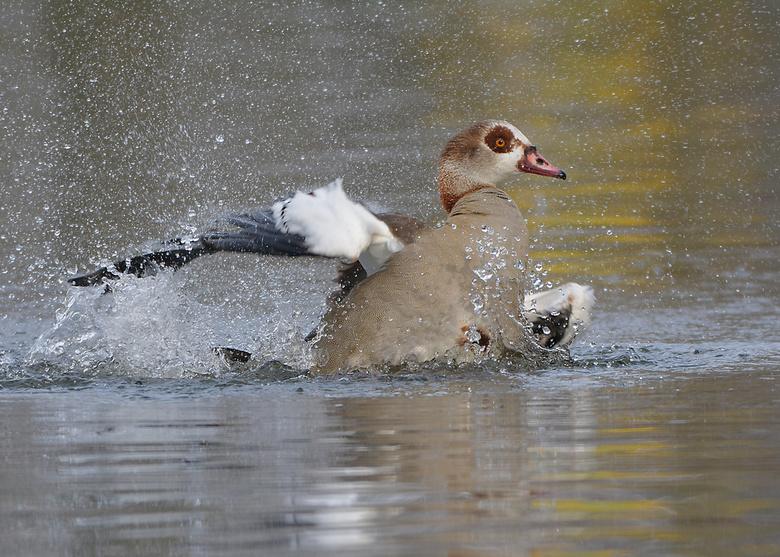 Verfrissend bad -