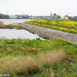 25-04-2016 Langs de Hollandse IJssel (1)-BorderMaker