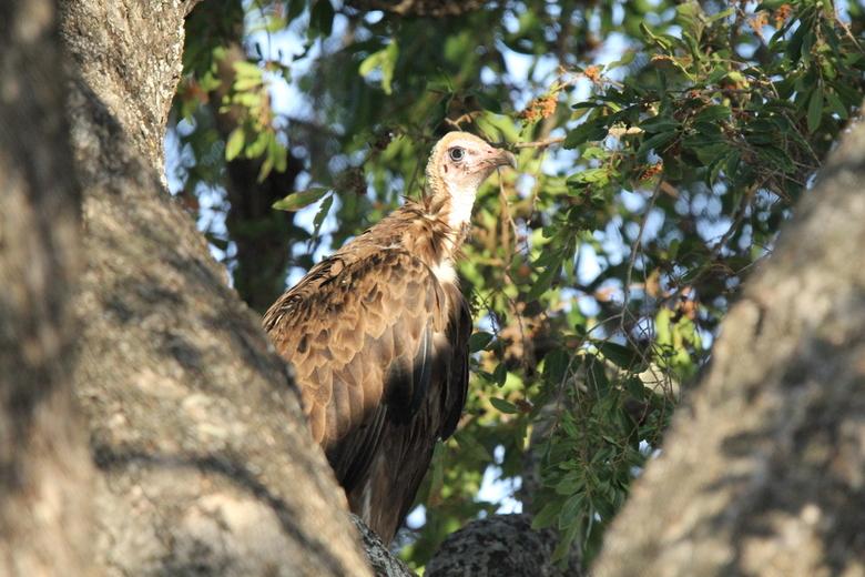 Jong op het nest -