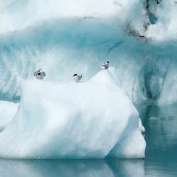 Sterns op ijs