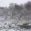 Sneeuw op Flakkee!