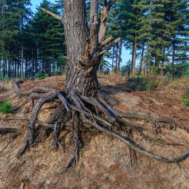 """Stamboom - Ik vroeg de boom wat hier de oorzaak van is, het was even stil, waarna hij mij antwoorde, """"Dit is een gevolg van een diepgaand stamboo"""