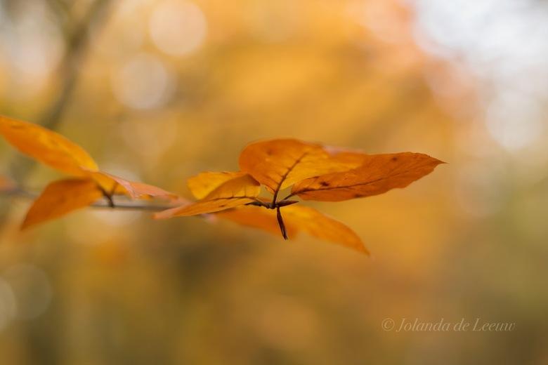Herfst kleuren  -