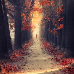 Walk in magic