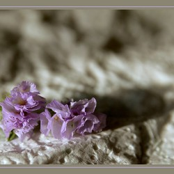 Afgevallen droogbloemen