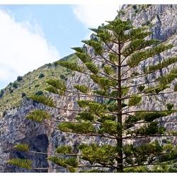 A very beautiful tree