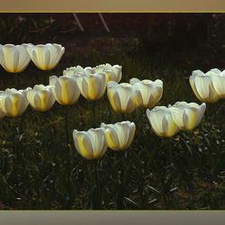 ritme in bloemen...............