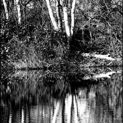spiegelbeeld zwart-wit