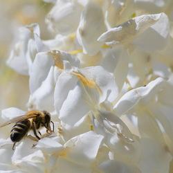 bloemetjes en de bijtjes