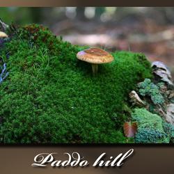 Paddo Hill
