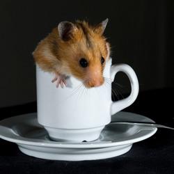 Hamster op de koffie