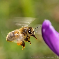 Bee on a Mission II