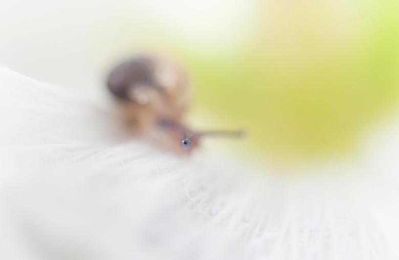 is het nog ver - Mijn vrouw kwam vanmiddag met een boel aanzetten voor mij, toen ik er mee bezig was om te fotograferen zag ik dit ieniemienie slakje