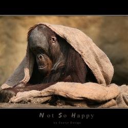 Not so Happy