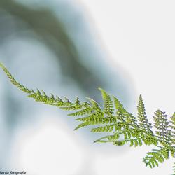 Green nature 2