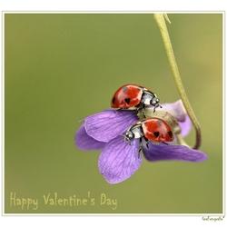 Happy Valentine's Day *