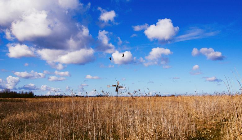 """""""I will follow you"""" - Meestal is het drukker op deze plek met vliegende vogels maar op dat moment maar 2 ganzen."""