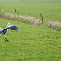 Perfecte landing