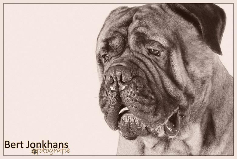 Bullmastiff - Wat een prachtige, imposante honden zijn Bullmastiffs toch... <br /> Op deze foto ziet deze stoere kerel er toch uit om te knuffelen?