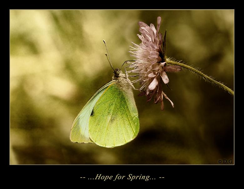 Hope for Spring - Alles wat we nu kunnen doen is hopen dat de kou snel voorbij is.<br /> <br /> Tot dan kijken we naar plaatjes...<br /> <br /> (g