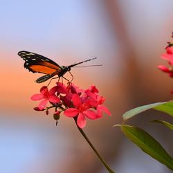vlinder in zachte tinten