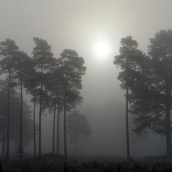 Mist in het Drents-Friese Wold