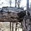 weer een foto met de gebroken boom!