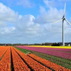 Bloeiend Holland