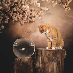 Cats like fish ... but hate to get their paws wet