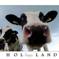 Zet hem op Holland!!!
