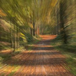 Het bos in....