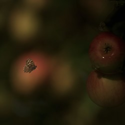 Gefladder in de boomgaard