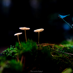 Ufo's in het bos