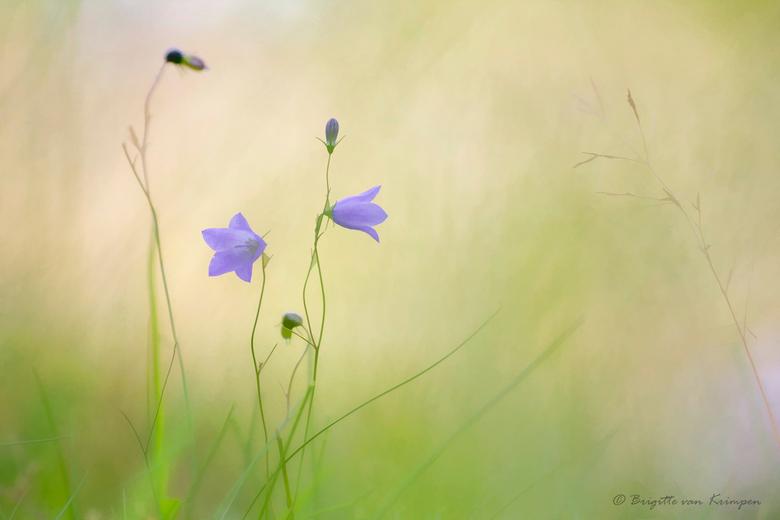Blue Pastels