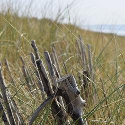 Duinen 2e Maasvlakte