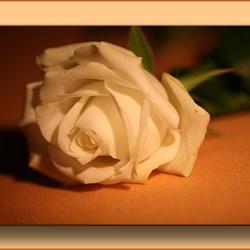 Bewerking: Flower of light (kader)