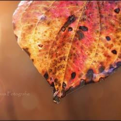 Autumn Leaves, part I
