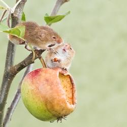 Hé dat is mijn appel!