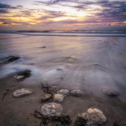 Jellyfish Sunset