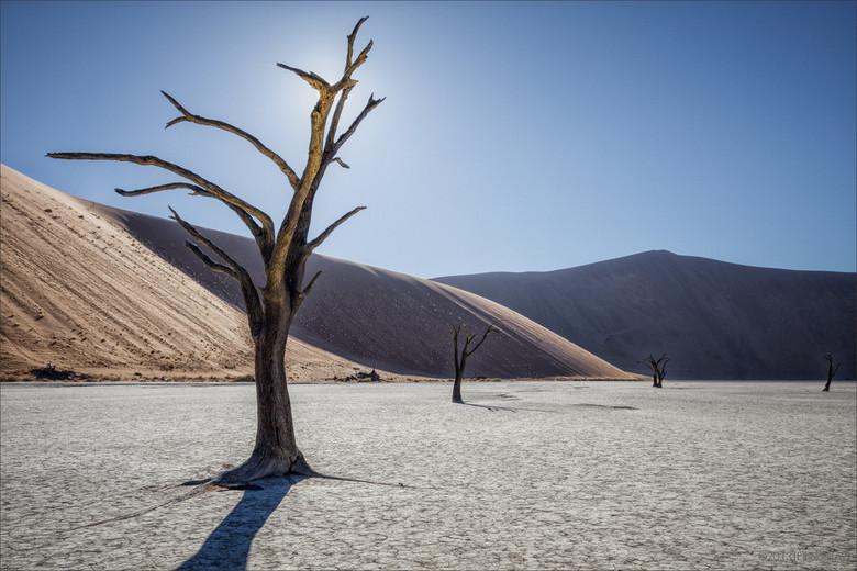 Deadvlei Awakenings - De Deadvlei (nabij Sussusvlei) in het Namib-Naukluft NP in Namibie is het resultaat van een opgedroogde rivier door klimaatveran