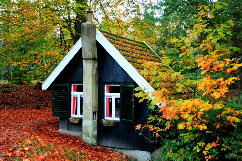Little house - A little house in the forest