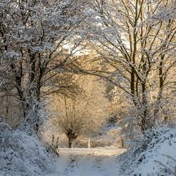 Zonsopkomst in de sneeuw