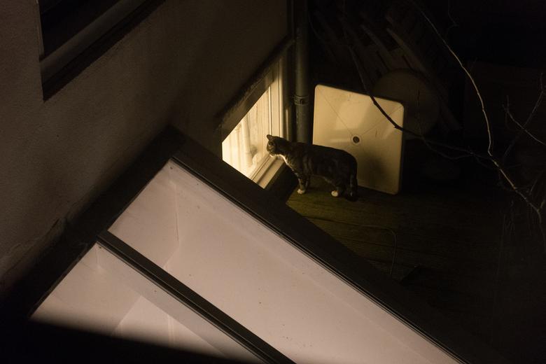 Middelburg - Kat - Een nieuwsgierige kat ergens op de daken van Middelburg, Zeeland. Wat zou ze zien?