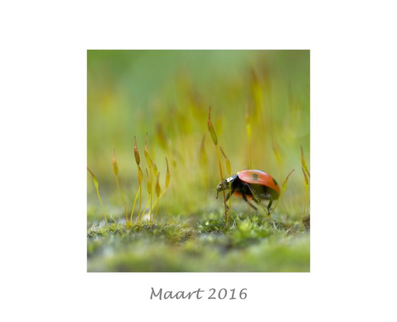 Maart 2016 - Jaaroverzicht 2016.<br /> Maart.
